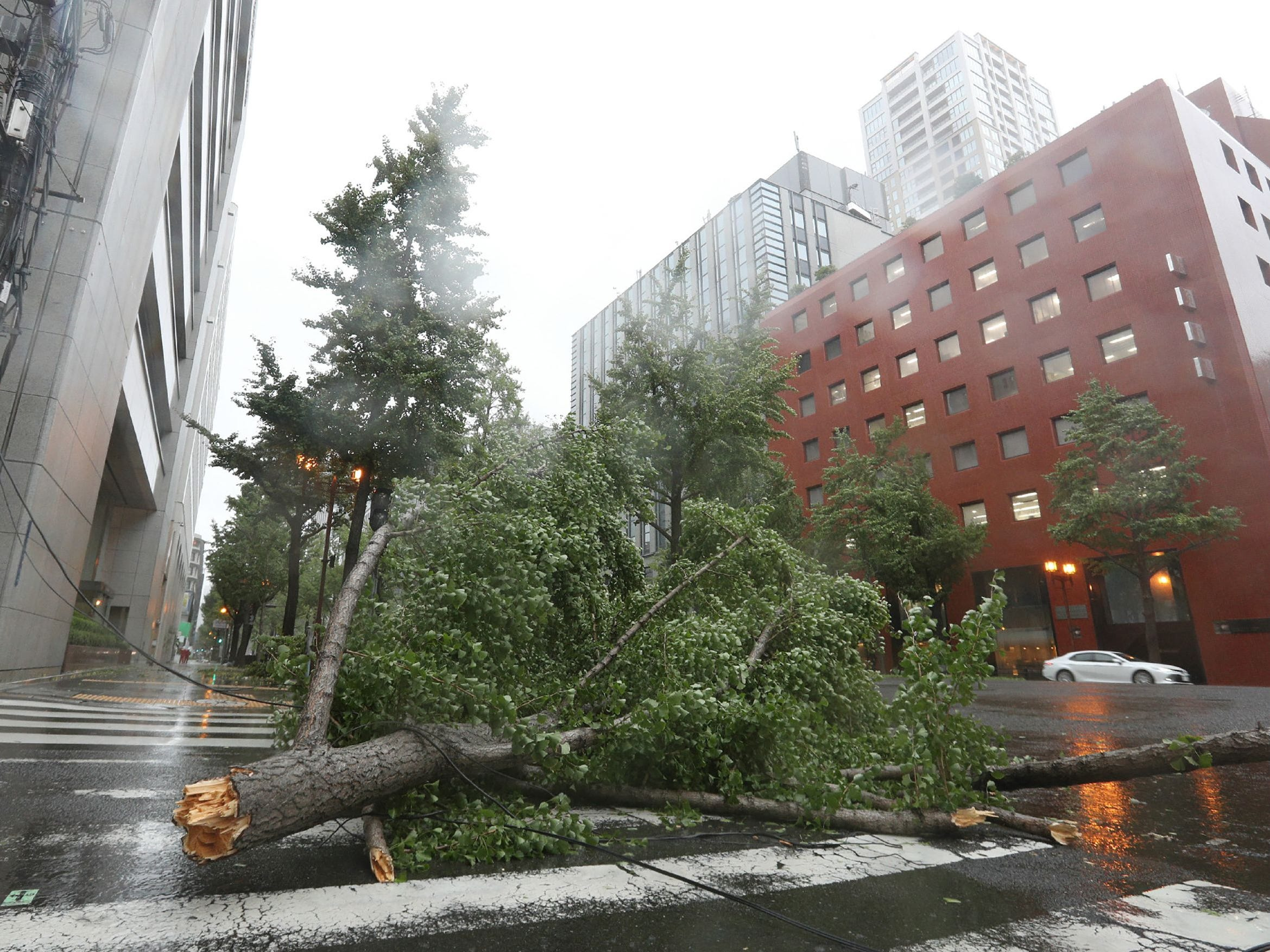 A fallen tree from strong winds lies on Midosuji street in central Osaka on September 4, 2018, as Typhoon Jebi made landfall around midday in southwestern Japan. - The strongest typhoon to hit Japan in 25 years made landfall on September 4, the country's weather agency said, bringing violent winds and heavy rainfall that prompted evacuation warnings. (Photo by JIJI PRESS / JIJI PRESS / AFP) / Japan OUTJIJI PRESS/AFP/Getty Images ORIG FILE ID: AFP_18U1S5