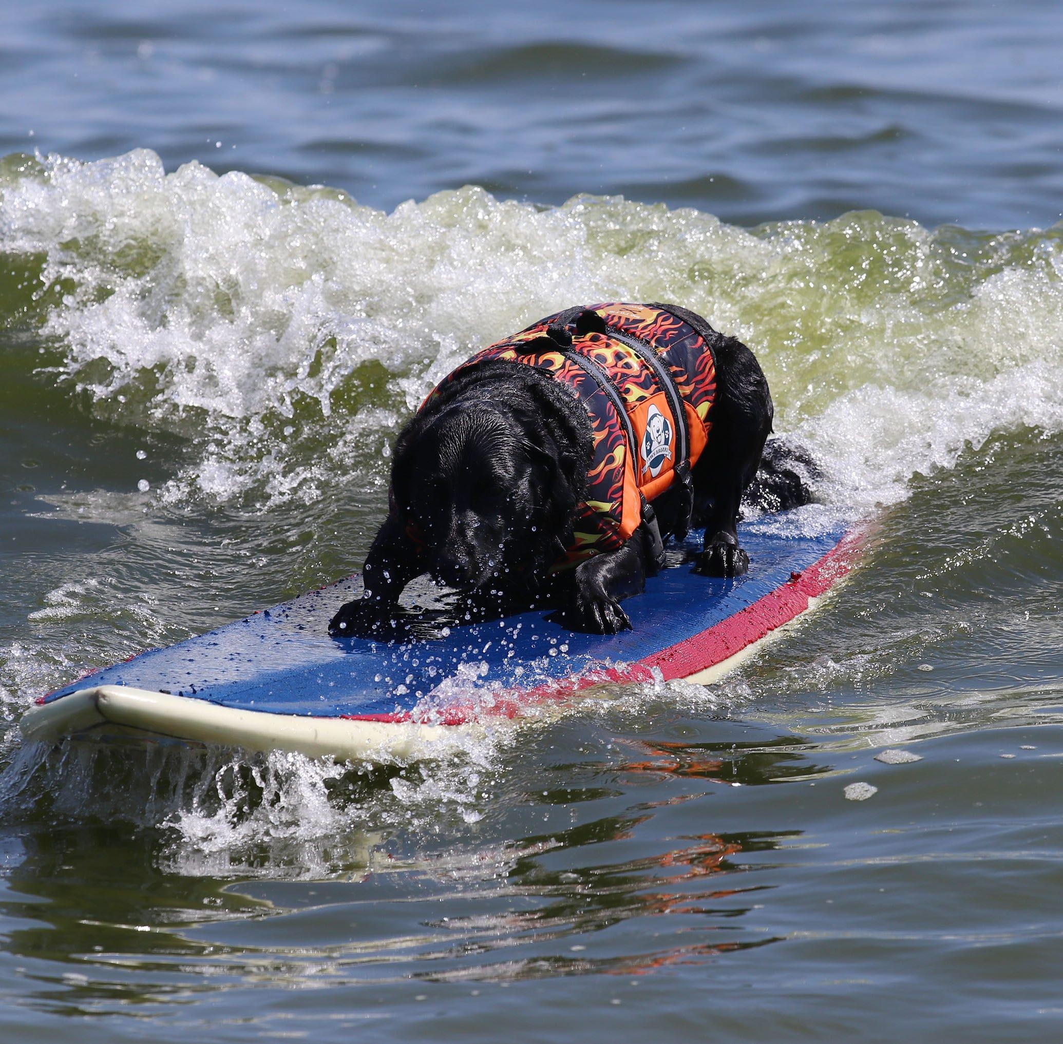 Overreaching at the beach: Bergmann