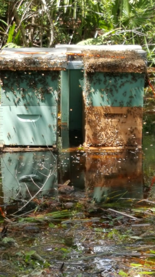 Andy Harrell keeps 100 bee hives on three acres in Grant-Valkaria.