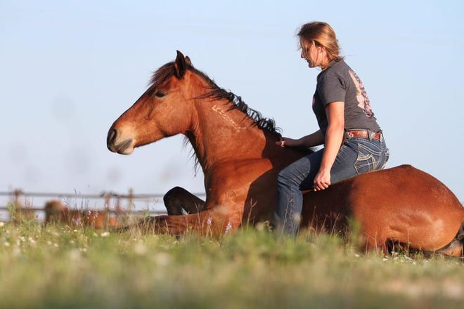 The Extreme Mustang Makeover involves 100 wild mustangs and 100 trainers, who are given 100 days to gently train them for adoption.