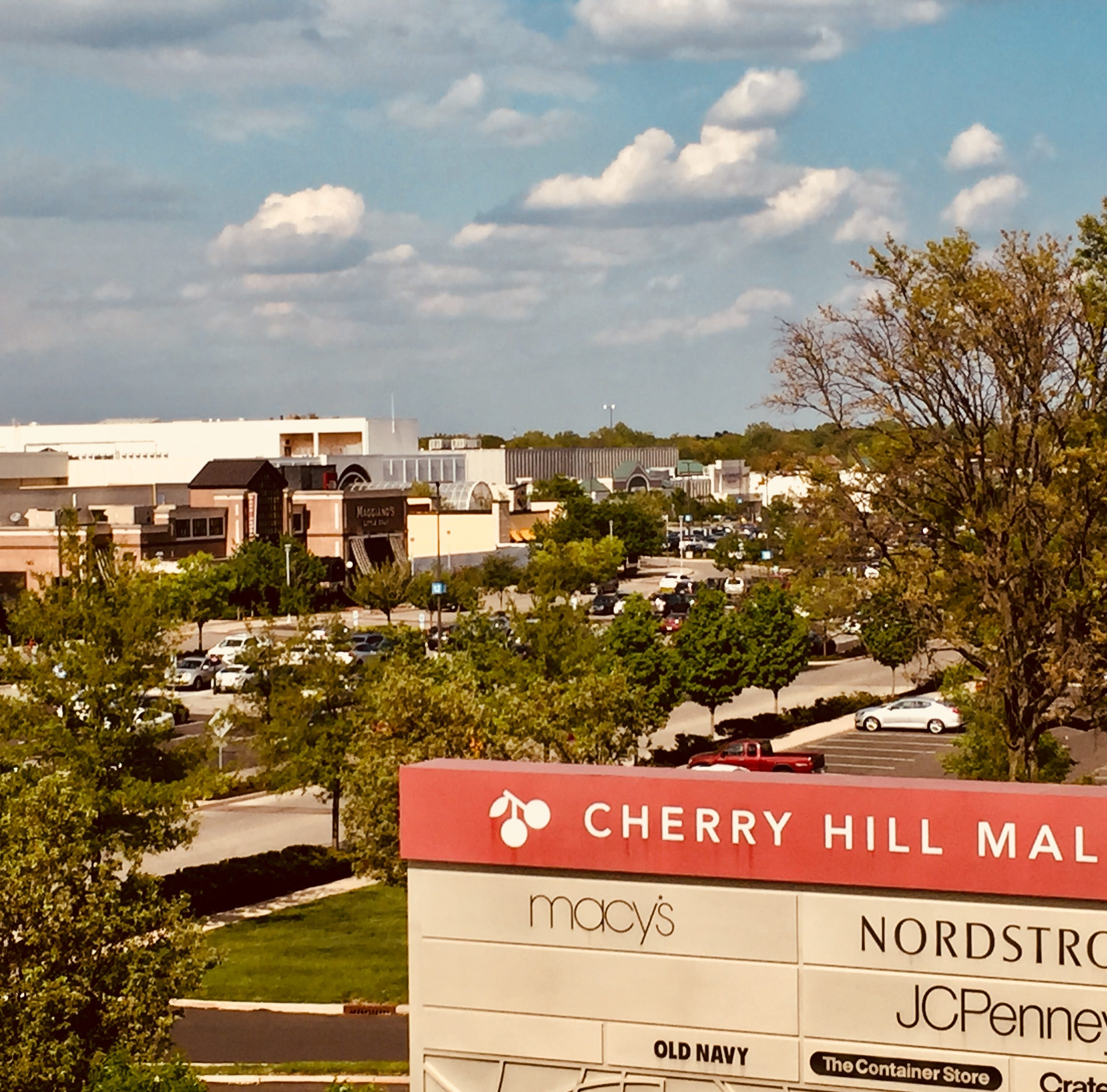 Artificial trees to sprout soon at Cherry Hill Mall store