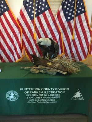 A taxidermy mount of an adult bald eagle has arrived and is now on public display at the Hunterdon County Arboretum, 1020 Route 31 North, Lebanon.