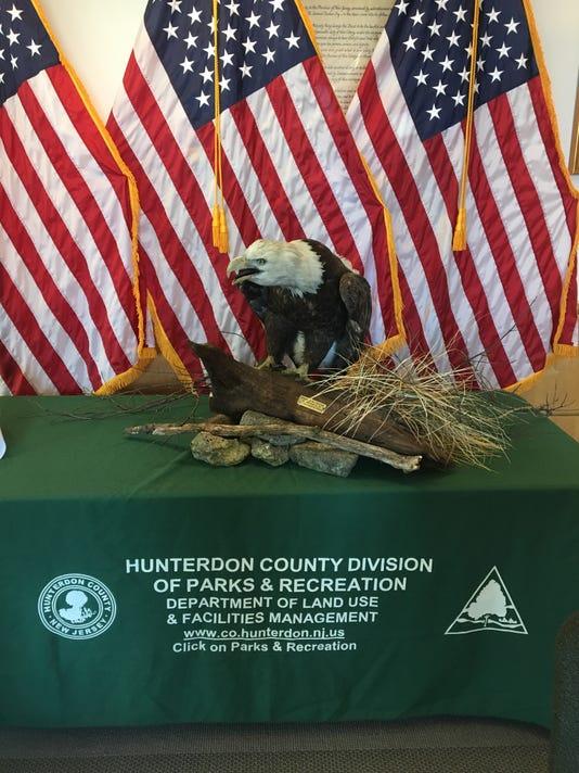 Bald eagle display at arboretum PHOTO CAPTION