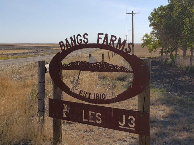The Bangs Farm, located 20 miles north of Inverness, is a four-generation family operation that has used three brands over the years. LES was first established by homesteader Laura Etta Smalley, who later married William Bangs. Other brands include those established by son Kenneth Bangs and his wife Norma (N-bar-K), and Jeff Bangs and his family, which includes wife Katie and daughter Genevieve (J-bar-3).