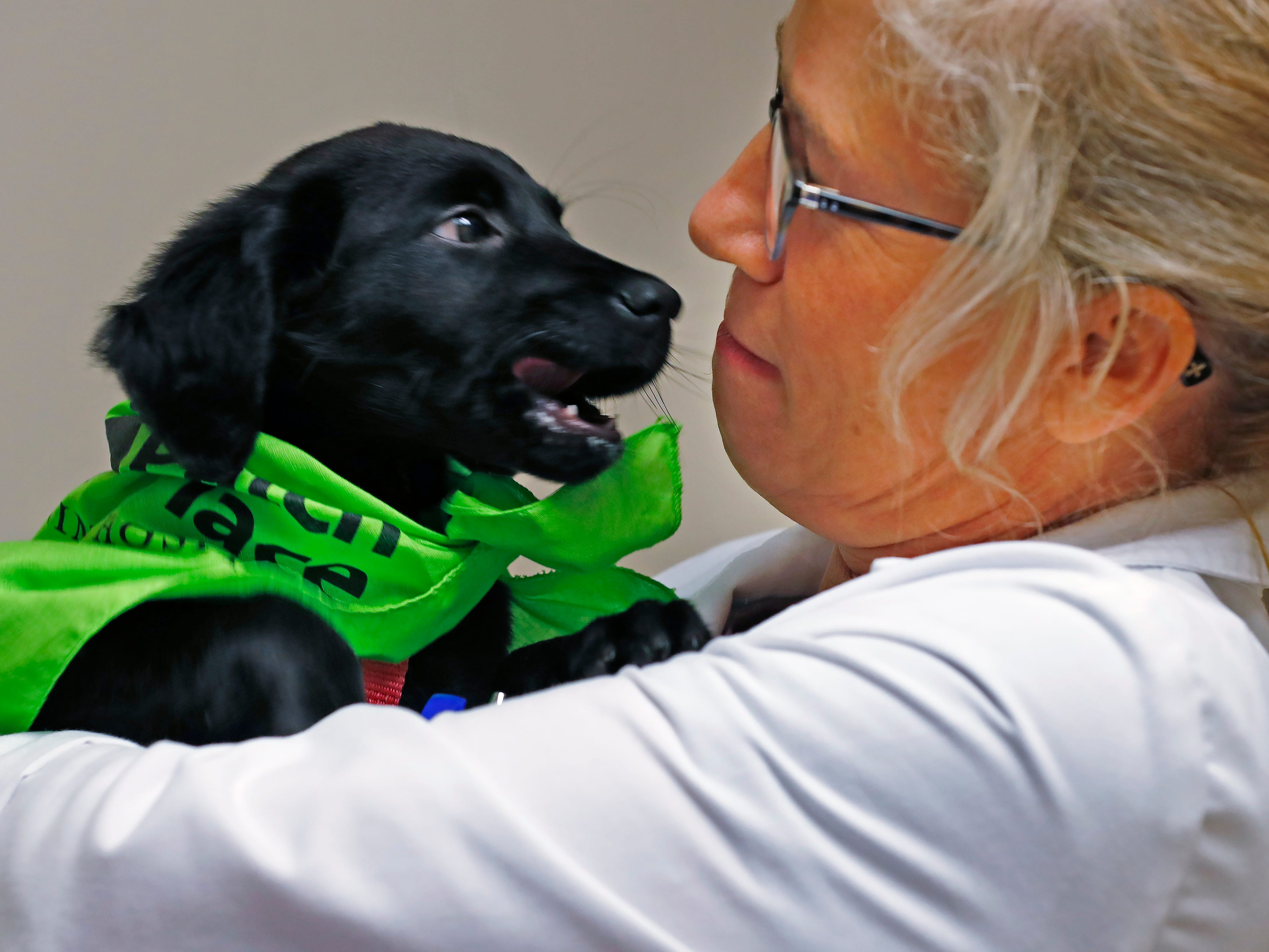 Dr. Penny Dowden plays with Maggie during her appointment at Paw Patch Place Animal Hospital, Friday, Aug. 31, 2018.  The veterinary clinic is the only one in Indiana to earn special fear free certification from an international program that aims to help vets reduce anxiety for pets prone to feel stressed in their offices.  Sprayed on this puppy's bandana is a dog pheromone used to calm dogs.