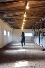 Jason poses for a photo op in the stables at Hooves & Feathers.