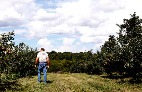 Ralph Hugus stands between rows of healthy cameo and red delicious apples  Wednesday, Sept. 5, 2018, at Hugus Fruit Farm near Rushville. High humidity and heat this summer have damaged the honeycrisp apple crop throughout the region. Hugus estimated about 50 percent of his honeycrisps won't be able to be sold.