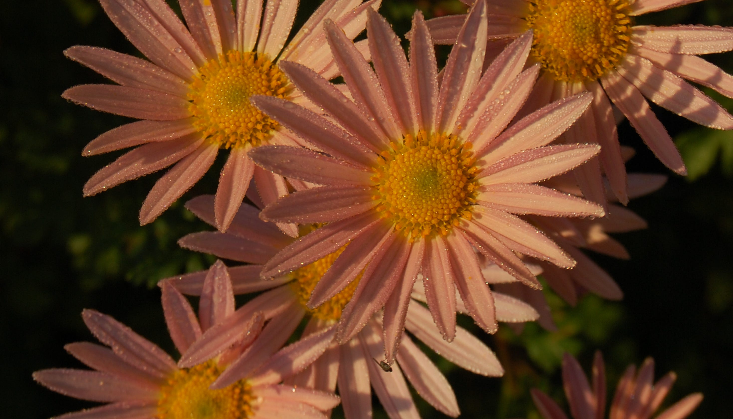 Pot Mums Are The Worst Try These Other Fall Garden Plants