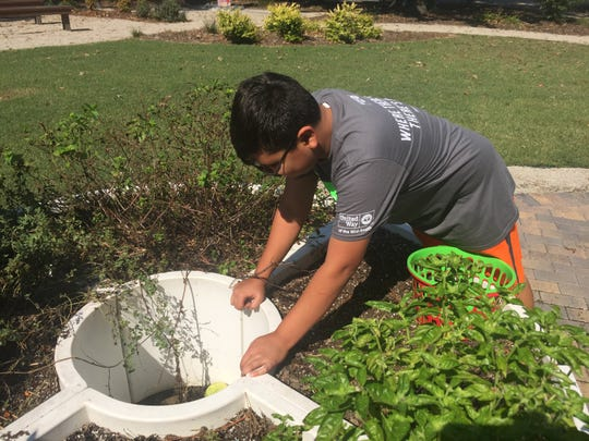 A volunteer works on a garden during the 2017 Day of Caring organized by United Way of the Mid-South.
