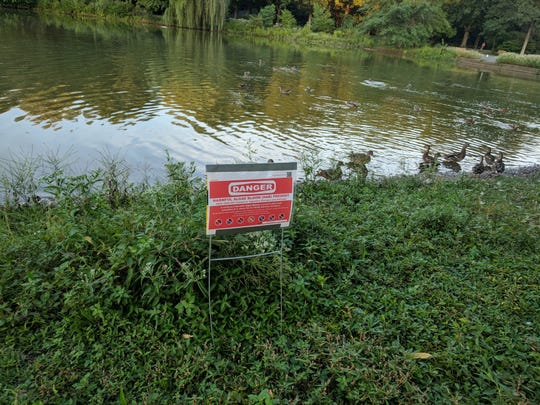 The NJDEP's Bureau of Freshwater & Biological Monitoring confirmed the HAB condition at the Glen Rock duck pond on Aug. 20.