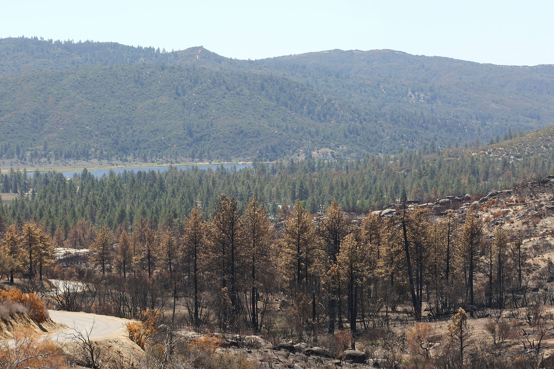 A patch of conifers were damaged in a heavily-burned area of the Cranston Fire in the San Jacinto Wilderness. Lake Hemet can be seen in the distance.
