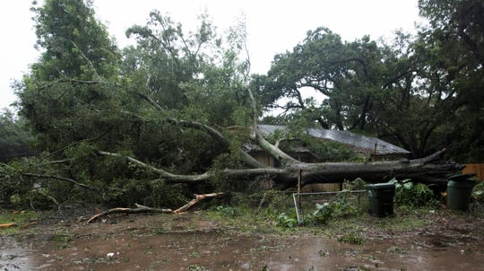 A large tree is toppled in the Brownsville area as Tropical Storm Gordon moves over the Panhandle on Wednesday.