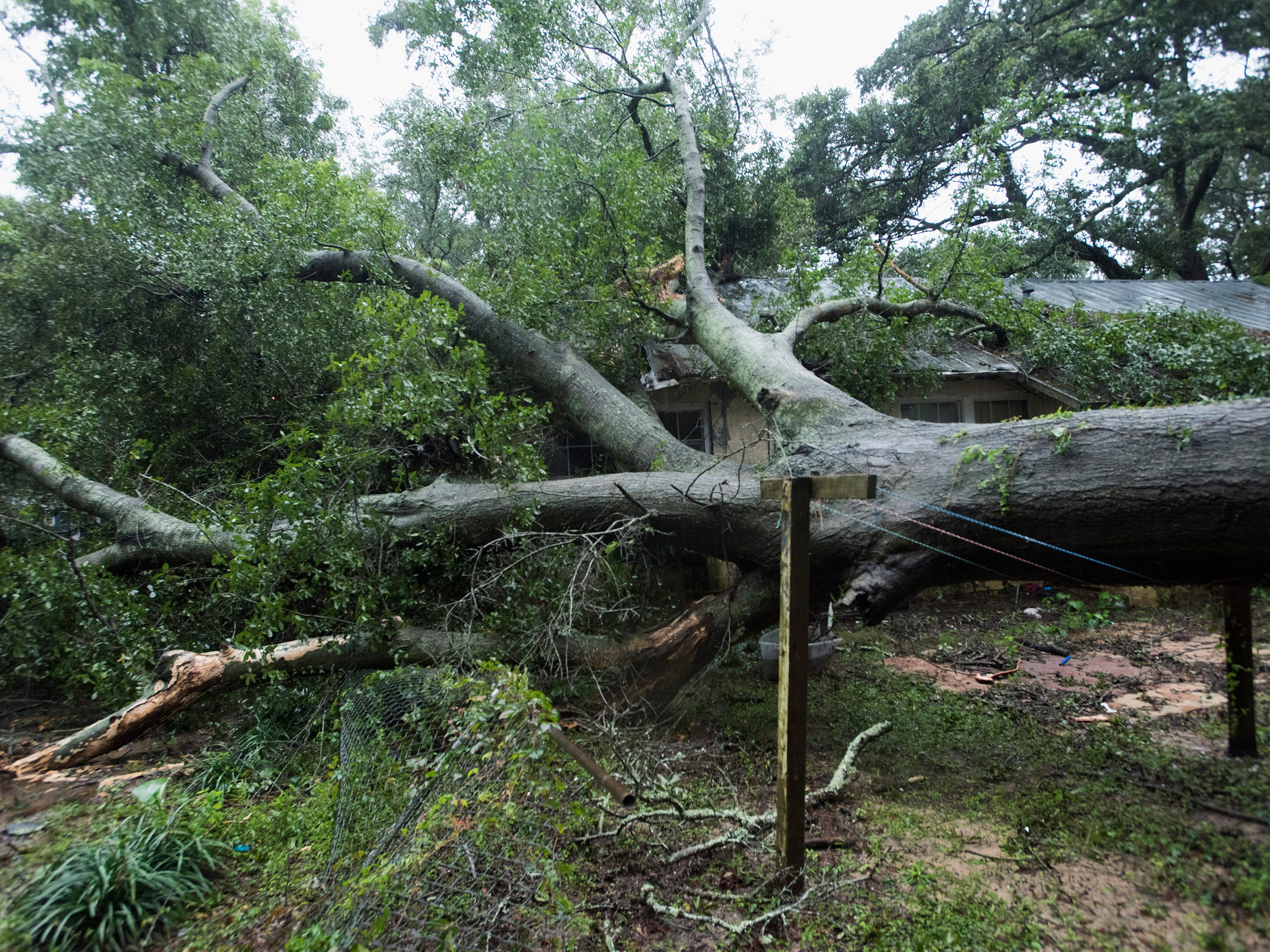 A large tree is toppled in the Brownsville area as Tropical Storm Gordon exits the Gulf Coast on Wednesday, Sept. 5, 2018.