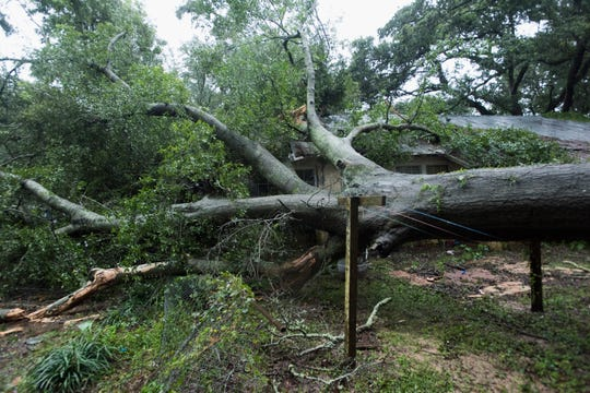 Tropical Storm Gordon toppled a large tree in the Brownsville area Wednesday as rain and winds swept through the Panhandle.