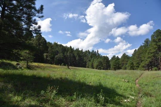 The trail wanders through moist meadows.