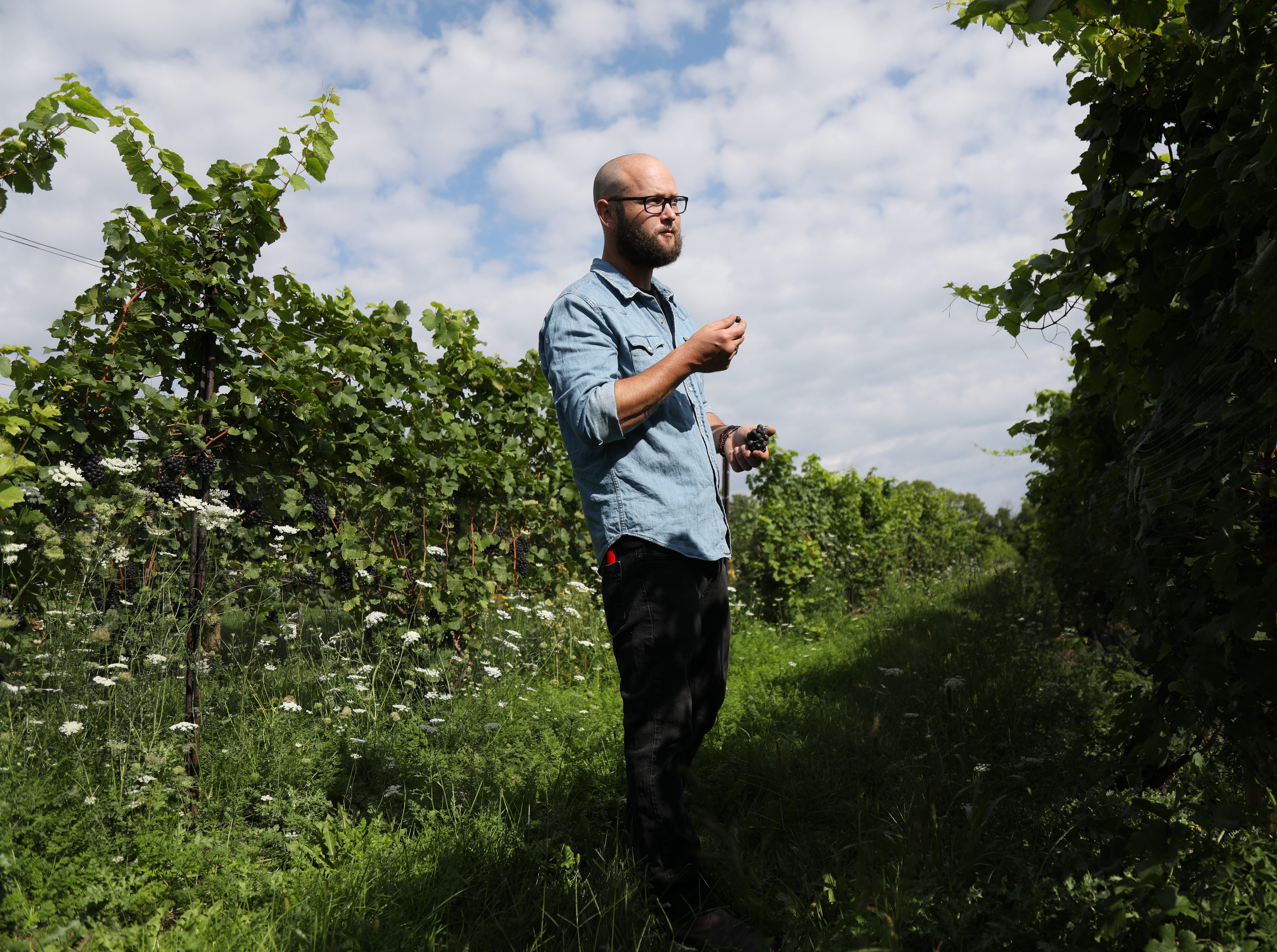 Nathan Kendall, who owns Nathan K. Wines tastes Pinot Noir grapes at Tuller Vineyards on Seneca Lake.