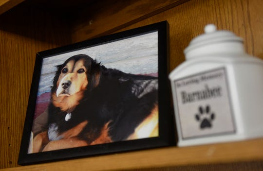 A photo of Barbanee, the inspiration for Grey Face Rescue, sits high on a shelf at the new facility in St. Cloud.