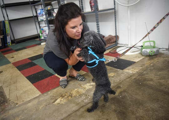 Bethie Gondeck greets a senior dog at the new Grey Face Rescue facility Tuesday, Sept. 4, in west St. Cloud. The facility will feature a private, indoor dog park and meet and greet areas for families and dogs.