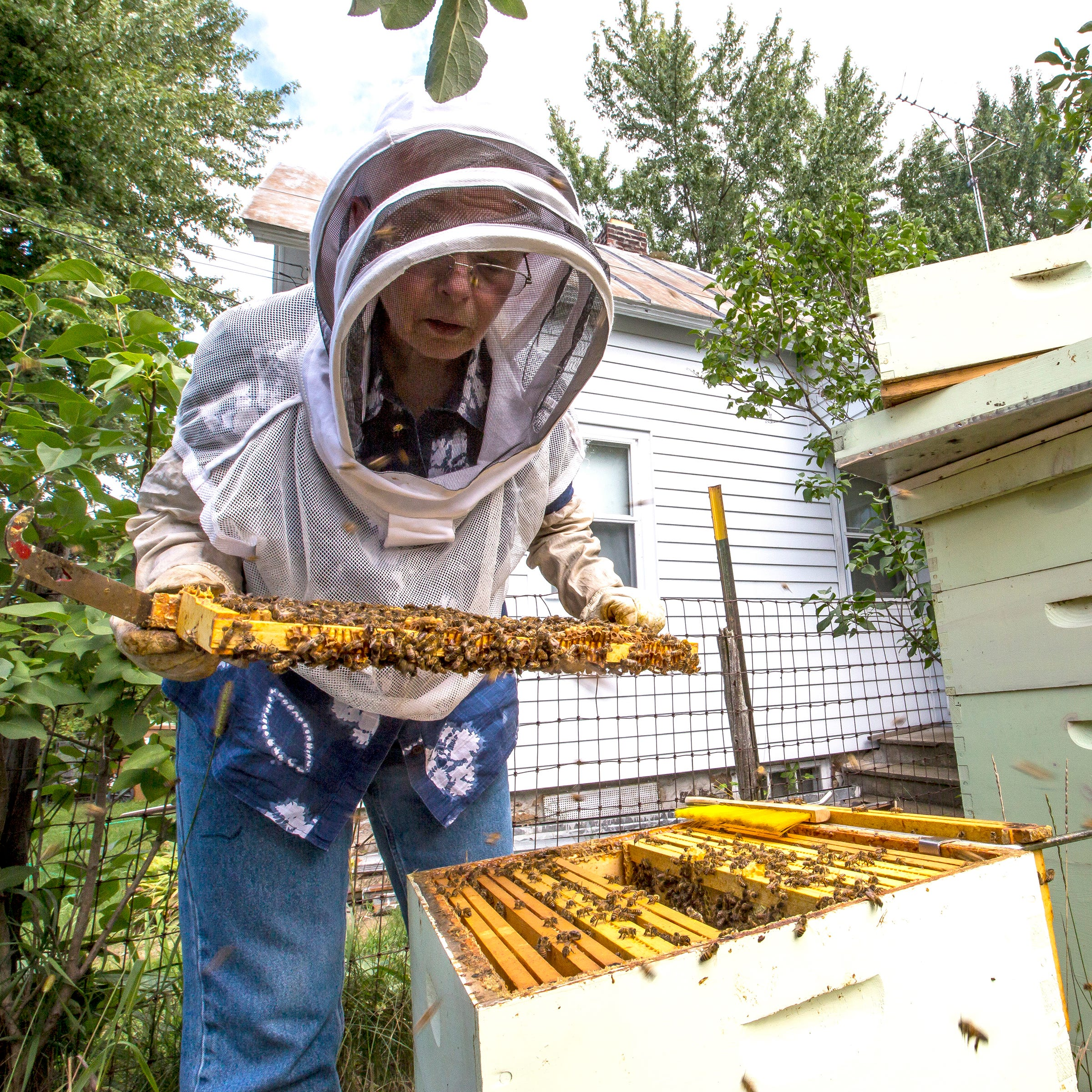 'Those are good neighbors': Request to keep bees prompts Stevens Point to weigh ordinance