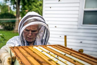 Joy Berg and Wendy Dolan are hobbyist beekeepers who have brought apiaries full of thousands of bees to Stevens Point this year.
