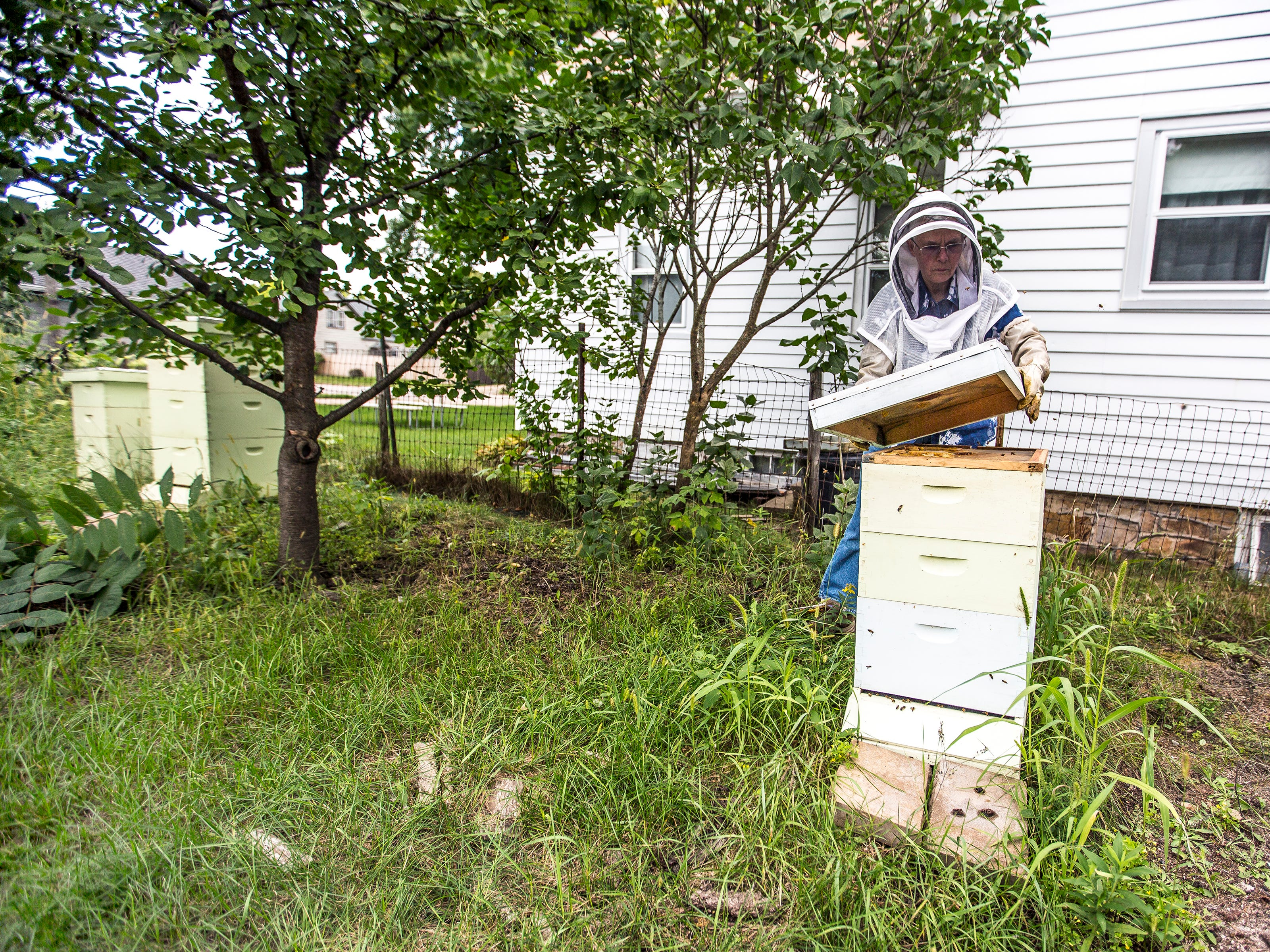 Joy Berg opens a hive among those she and her sister Wendy Dolan keep in the backyard of Dolan's home in Stevens Point, Wis., August 29, 2018.