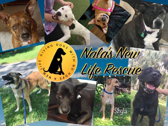 Nala's has rescued dogs that no one else will take, dogs that have lost all hope.