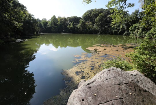 The pond on the site of Glenn Griffin's proposal for affordable housing in Buchanan, just north of the intersection of Bleakley Avenue and Broadway.