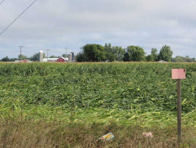 One of several tornadoes that swept across the southern edge of Fond du Lac County left a swath of damaged crops behind.