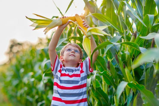 Kid Boy With Sweet Corn On Field Outdoors
