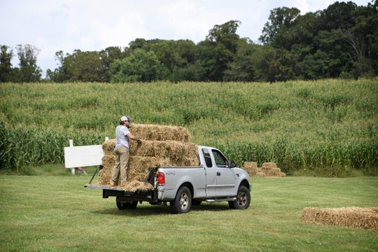 Eliada staff member Hampton Boggs rides past the corn maze on the back of a truck full of bales of hay as he sets up for the annual corn maze on Wednesday, Aug. 5, 2018. The 10th annual Fall event, which opens on September 15, features the maze through the cornfield, a jumping pillow, corn cannon, kiddie maze and more.