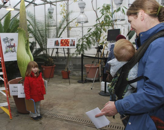 Dalia Bosworth, 5, poses in front of the corpse plant, dubbed Wee Stinky, as her mother, Lara Estroff, of Dryden, takes a photo in 2014.