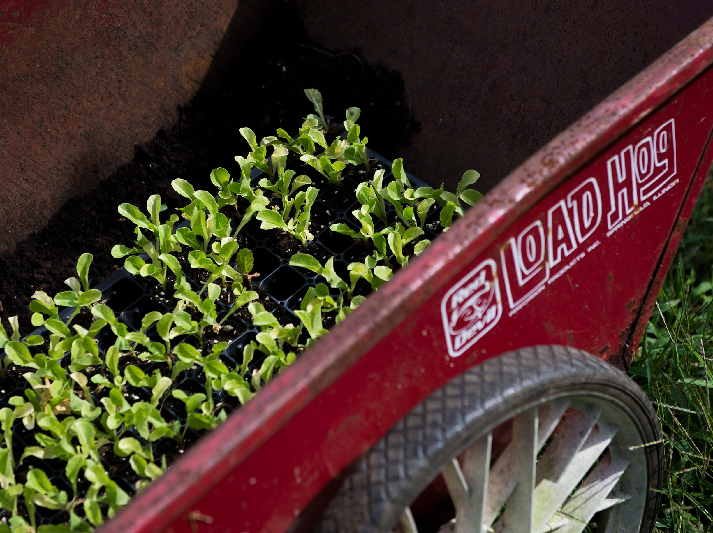 A wheelbarrow is filled with crops at Free Haven Farms Thursday, Aug. 23, 2018 in Lawnside, N.J.
