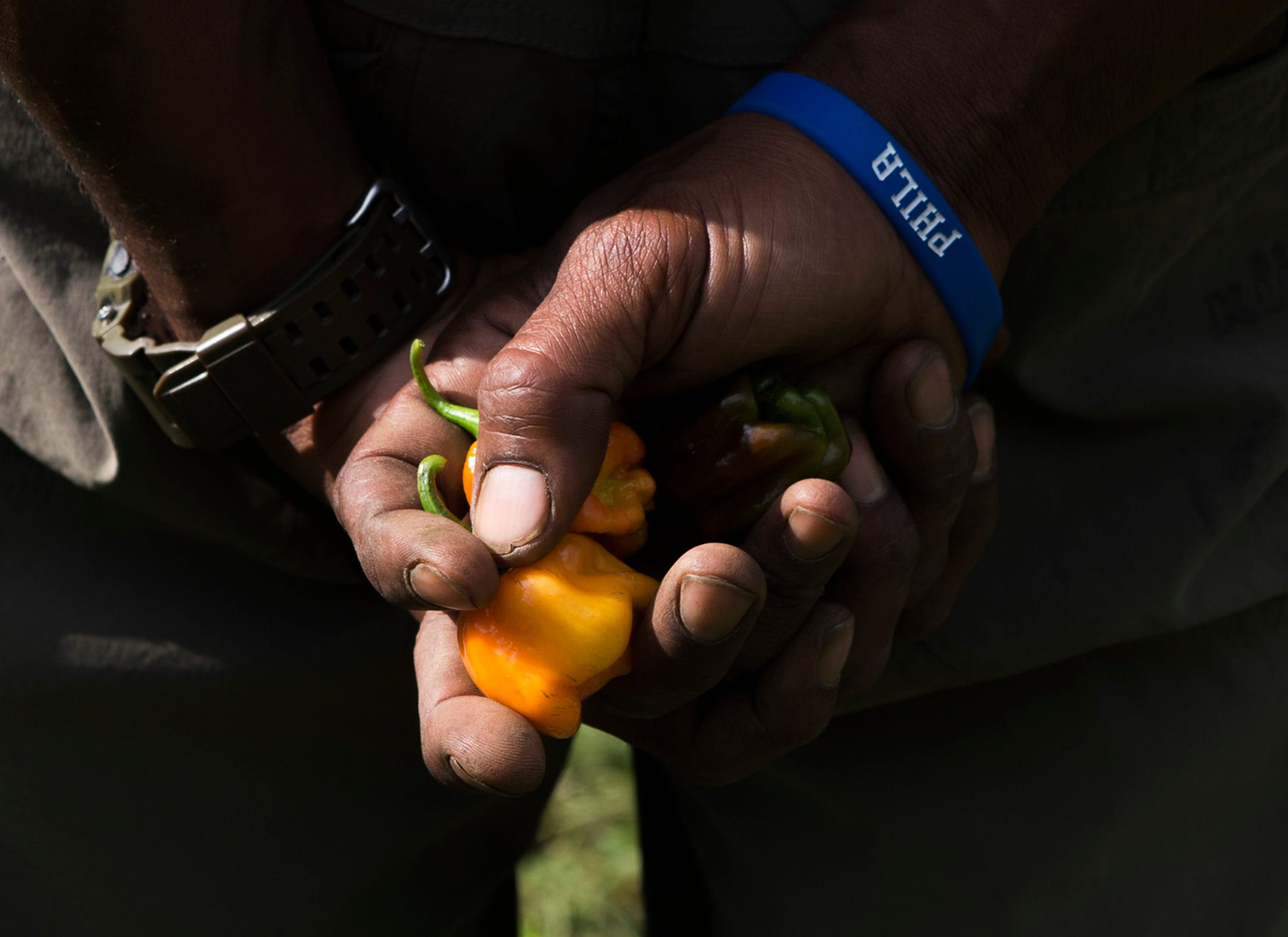Micaiah Hall clutches a handfull of hot peppers on his farm in Lawnside.