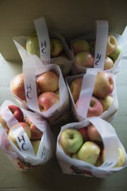 Honeycrisp apples stand ready to be purchased at the Hirsch Fruit Farm store located on Ohio 772 in Chillicothe Thursday morning.