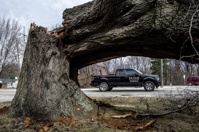 "A large tree is seen after falling at Krafft Road and Pine Grove on Thursday, March 9, 2017,  in Fort Gratiot, Michigan. About 29,000 were without power in the Blue Water Area, and more than 700,000 lost power in southeastern Michigan in what DTE had called the ""largest weather event in DTE history."""