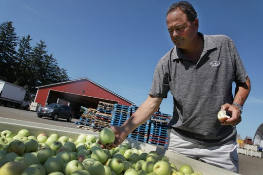 Paul Blake, one of the owners of Blake's Orchard looks at a batch of freshly picked apples in Armada on Wednesday, September 5, 2018.