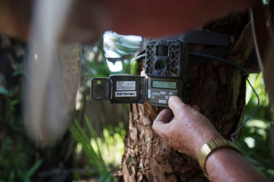 Every few weeks, Tom Mortenson ventures into the swamp to remove the SD cards from his game trail cameras and inspect his finds. Each camera holds between 8,000 and 20,000 images.