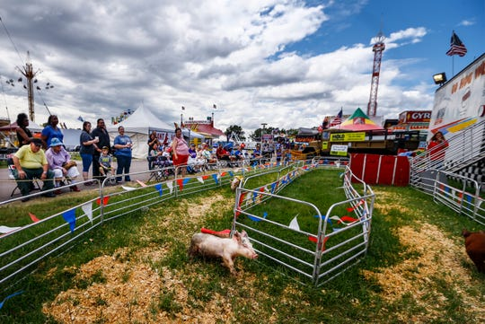 Swine scurry around a track, as they head to a victorious cookie during the Pig Races at the Delta Fair Wednesday afternoon.