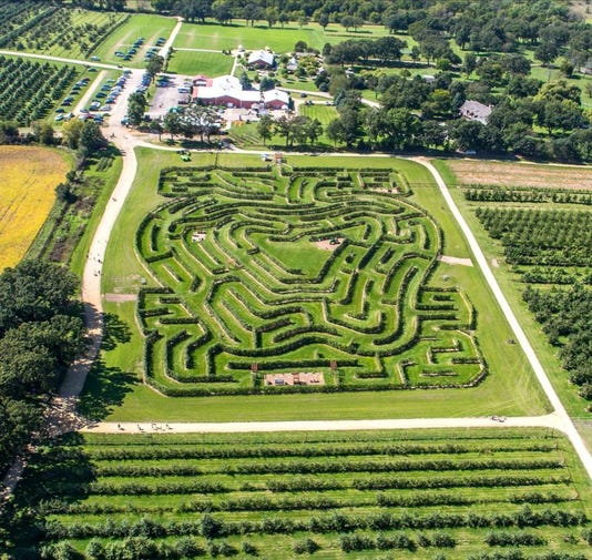 Apple Tree Maze