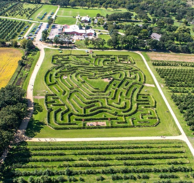 Royal Oak Farm has a maze made out of apple trees.