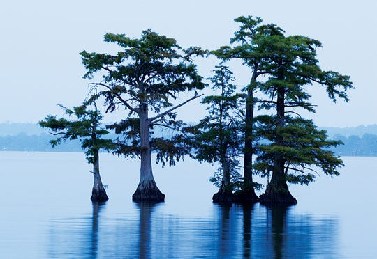 Reelfoot Lake was created after earthquakes in 1811 and 1812 caused the Mississippi River to flow backward, flooding the forest.
