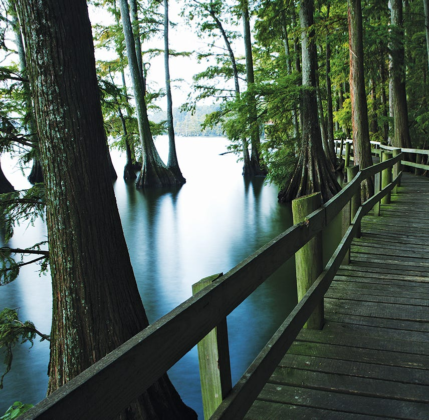 Stunning scenery greets visitors at Reelfoot Lake