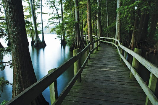 Walkway In The Swamp