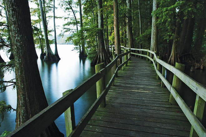 Trails at Reelfoot Lake State Park include this boardwalk, which offers an opportunity to explore the beauty of the park.