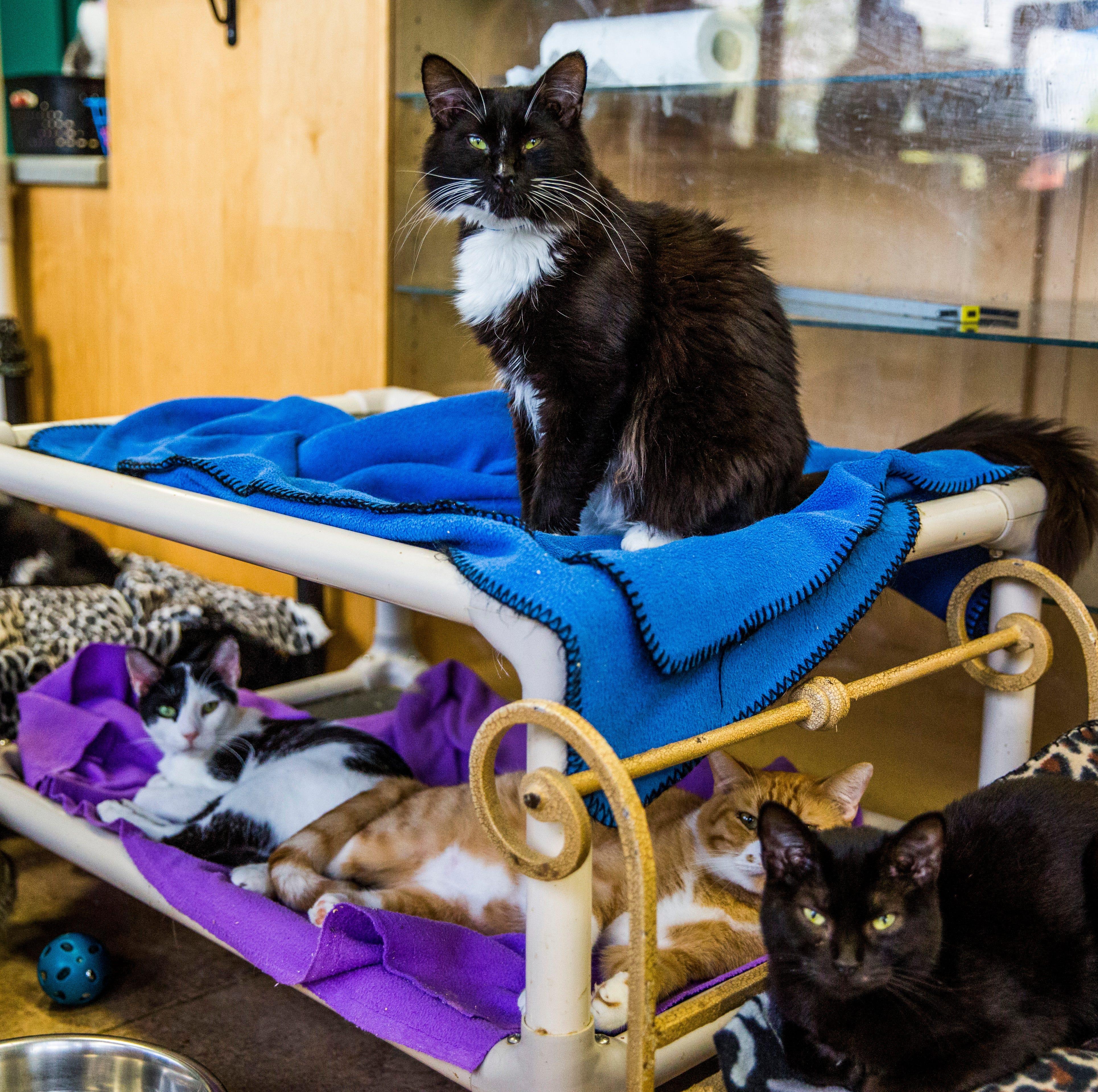 'Cane cats: Hurricane Irma scrambled county's vast population