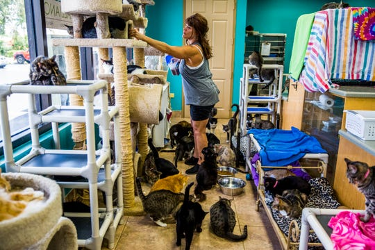 Volunteer Tracy Cannan feeds rescue cats at the Naples Cat Alliance on Wednesday, Sept. 5, 2018.