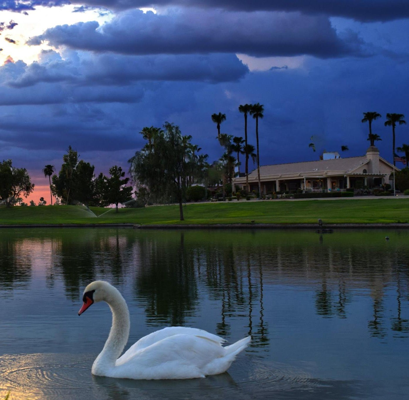 As defenseless swans fall prey, Sun City West rethinks golf course emblem