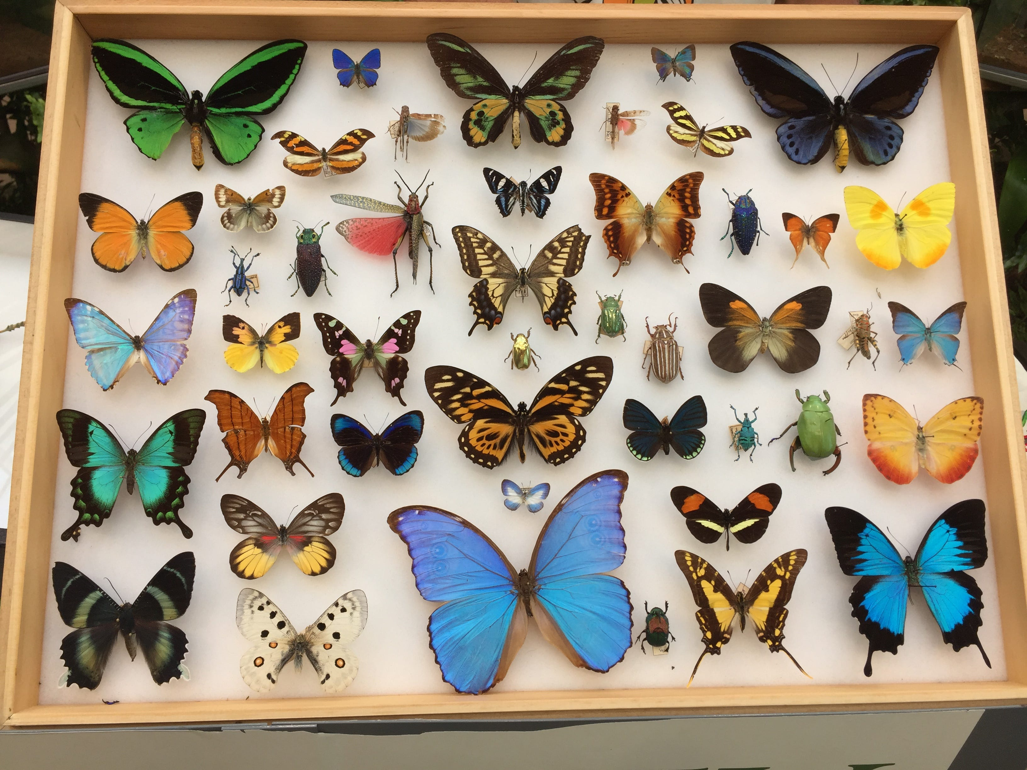 Check out these insects and displays that will be found at Bug-O-Ram at Hershey Gardens on Saturday, Sept. 8.
