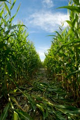 Macedon's Long Acre Farms, home to an Amazing Maize Maze that this year celebrates the first Kodak camera, hosts its Fall Opening Weekend beginning Saturday, Sept. 15.