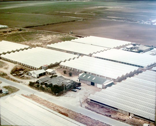 Ariel view of Sam's Greenhouse in 1964, with the Eitoku family home in the center. Sam's Greenhouse covered ten acres, five of which were greenhouses.